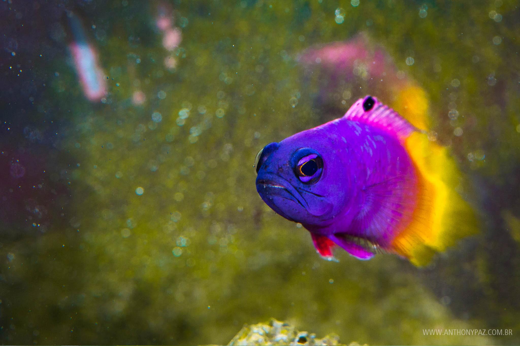 fotografia-natureza-macro-peixe-fotografo-anthony-paz-04.jpg